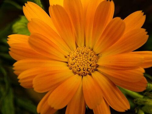 En blomst