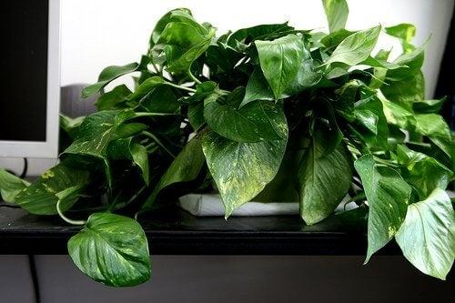 2-plant