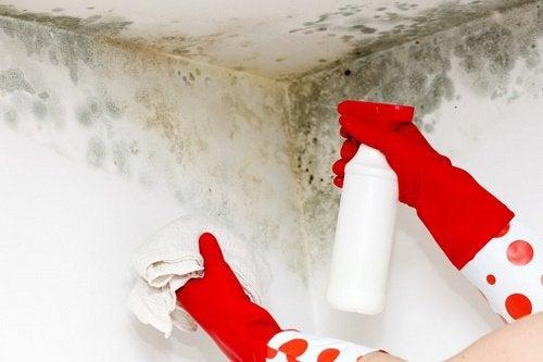 Husholdning: Sådan kan du nem og hurtigt fjerne mug