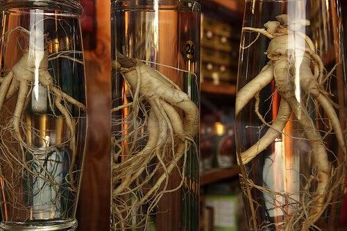 Ginseng rod i glas