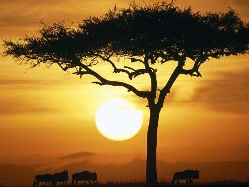 Afrikansk-savanne