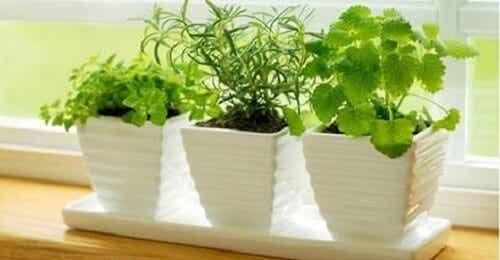 10 planter, der tiltrækker positive energier