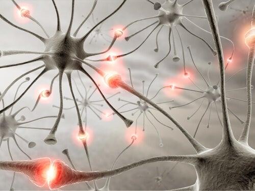 Naturlige midler der kan forbedre din hukommelse