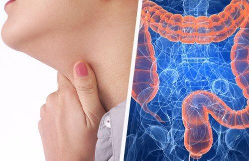 Hals og tarm påvirker hinandens sundhed