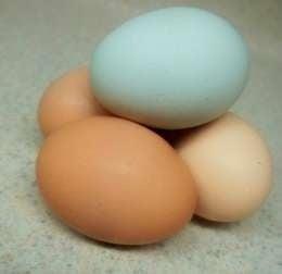 eggs-e1443659836661