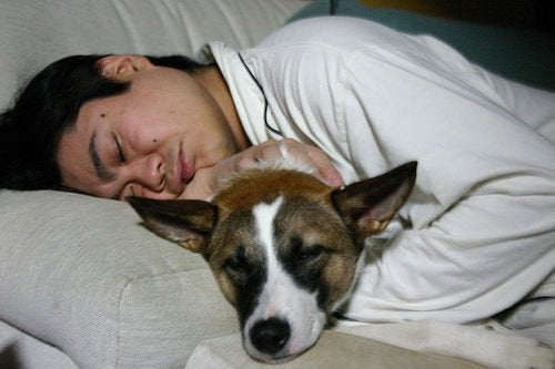 Mand der sover med sin hund