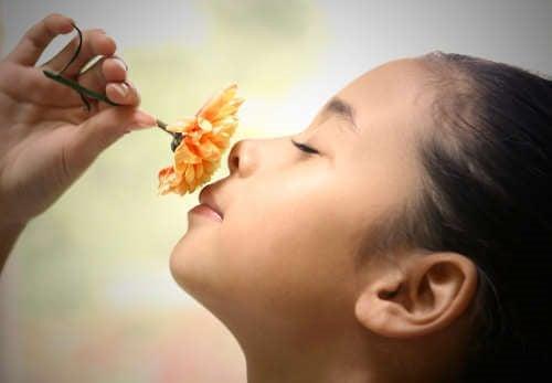 Vær opmærksom på giftstoffer der skader børn i planter.