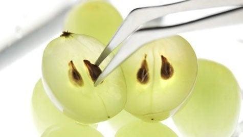 Vindruekerner