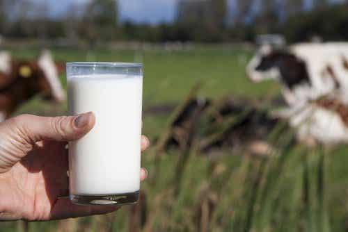 Hvorfor man ikke bør drikke komælk