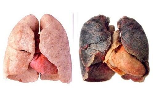 Sådan får du renere lunger