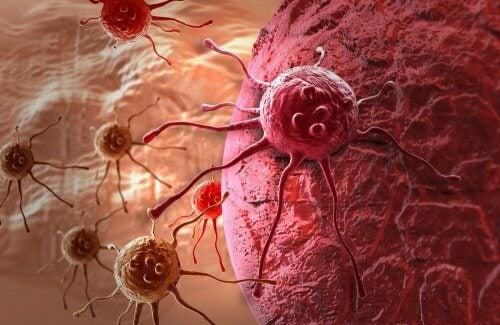 Kan mælkebøtte behandle kræft? Bliv klogere her