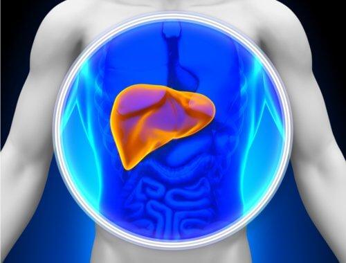 Det er vigtigt at detoxe din lever regelmæssigt