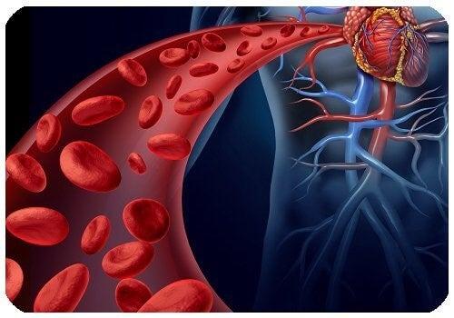 Røde blodlegemer