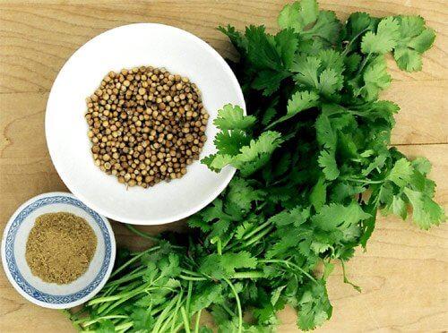 cilantro bør du altid have i dit køleskab