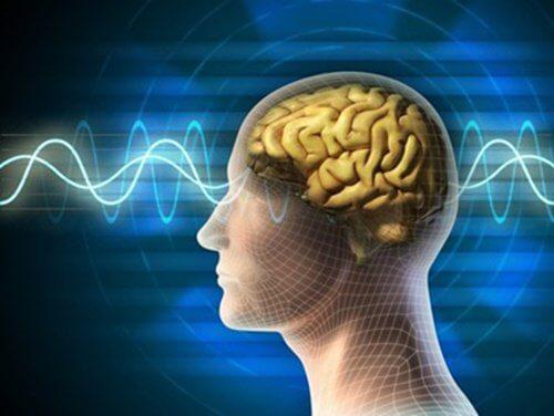 10 råd til en ung og sund hjerne