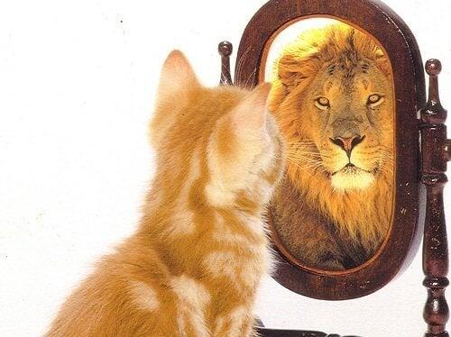 Kat ser sig selv i spejlet