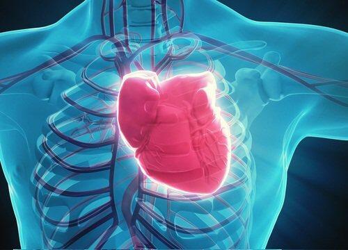 3-hjerte