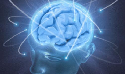 Hjerne2