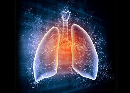 Lunger3