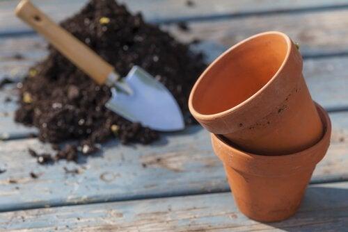 For at gro tomater derhjemme skal du bruge de rigtige potter
