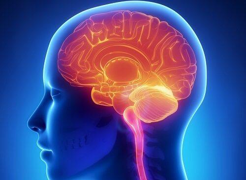 Tegning af en persons hjerne