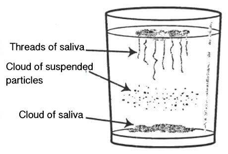 candidainfektion i tarmen