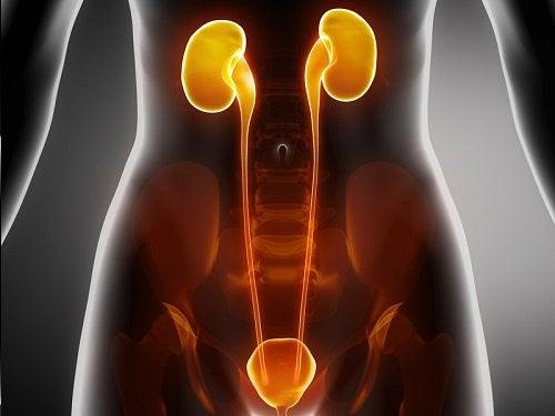 betændelse i urinrøret