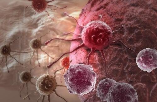 Kræftceller4