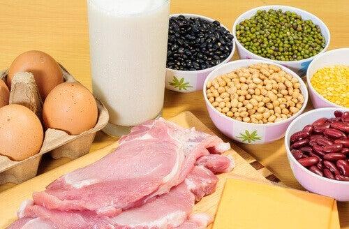 Proteinkost