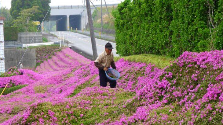 Mand i sin blomsterhave