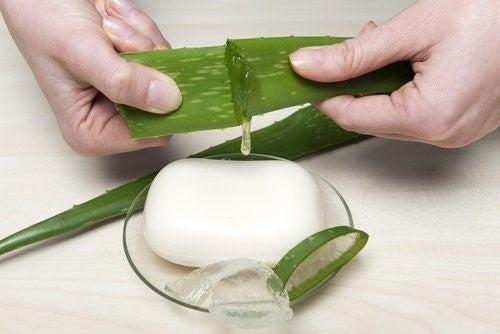 Aloe vera saebe