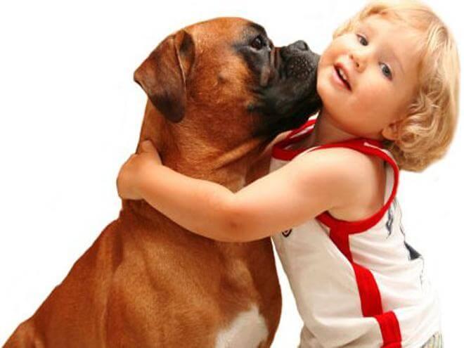 Dreng der krammer hund