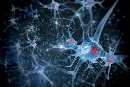 Hjerne celler