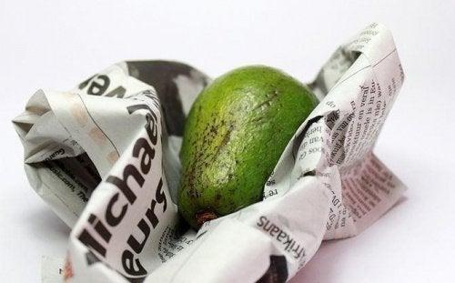 avocado-avispapir