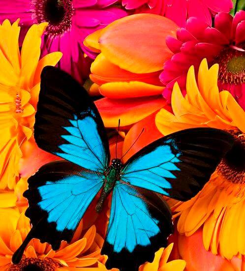 blomster_sommerfugl