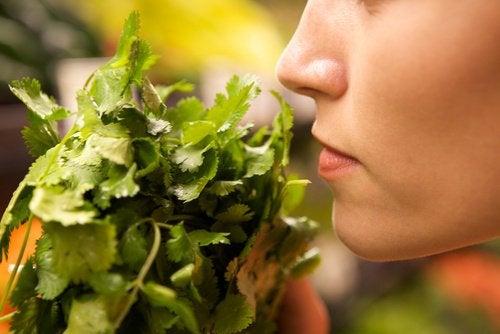 Kvinde der lugter til groent - holde maden frisk
