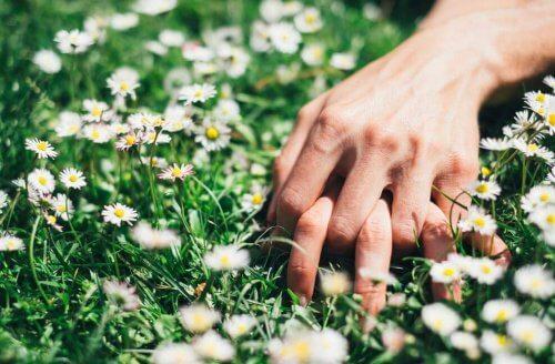 fordele ved gele af chia og hvordan man laver det
