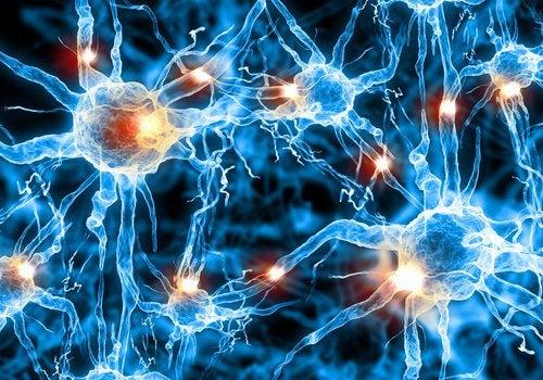 hjerneoevelser