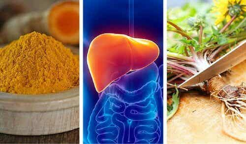 De 6 bedste urter til at beskytte ens lever