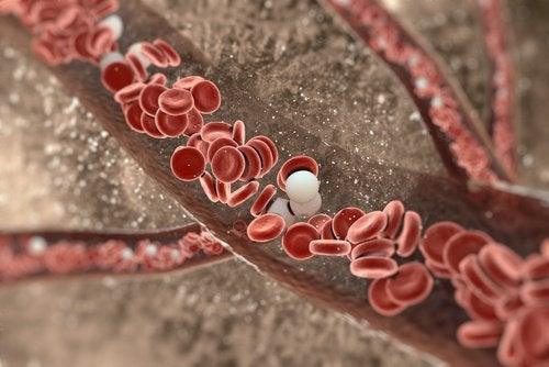 Roede blodlegemer
