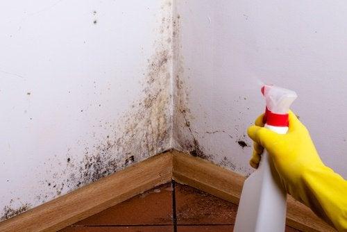 7 idiotsikre tricks til at fjerne mug