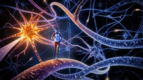 De 8 bedste øvelser til at styrke din hjerne