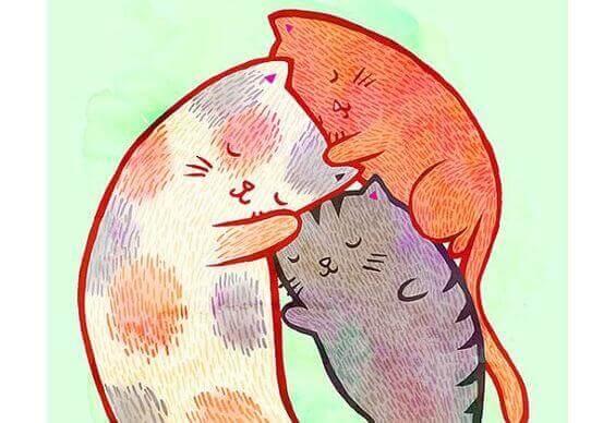 Katte - Vigtigheden af at vaere hoeflig