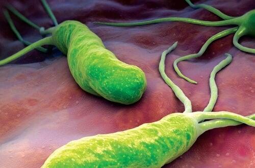 Denne bakterie forårsager smerte, oppustethed og diarré