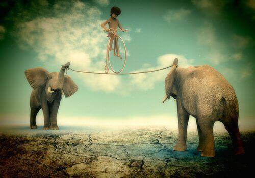 2 elefanter med et reb og en person der balancerer