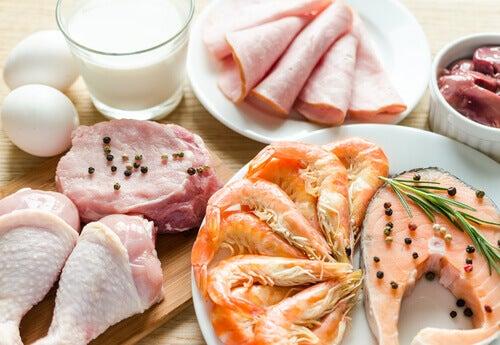 Forskellige kilder til protein