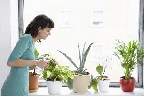 8 stueplanter der renser luften i dit hjem