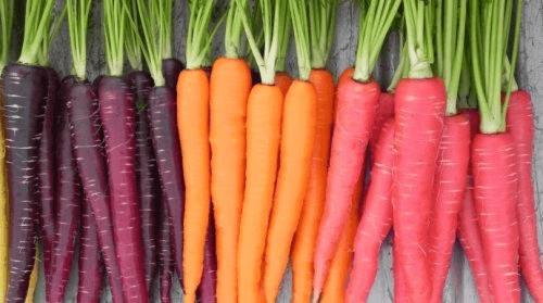 Forskellige typer guleroedder