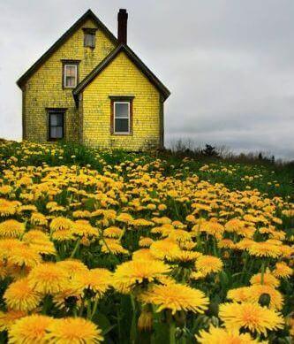 Gult hus og blomster