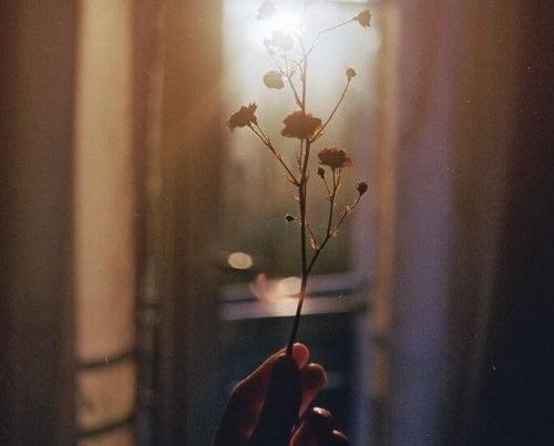 Blomst i solskind